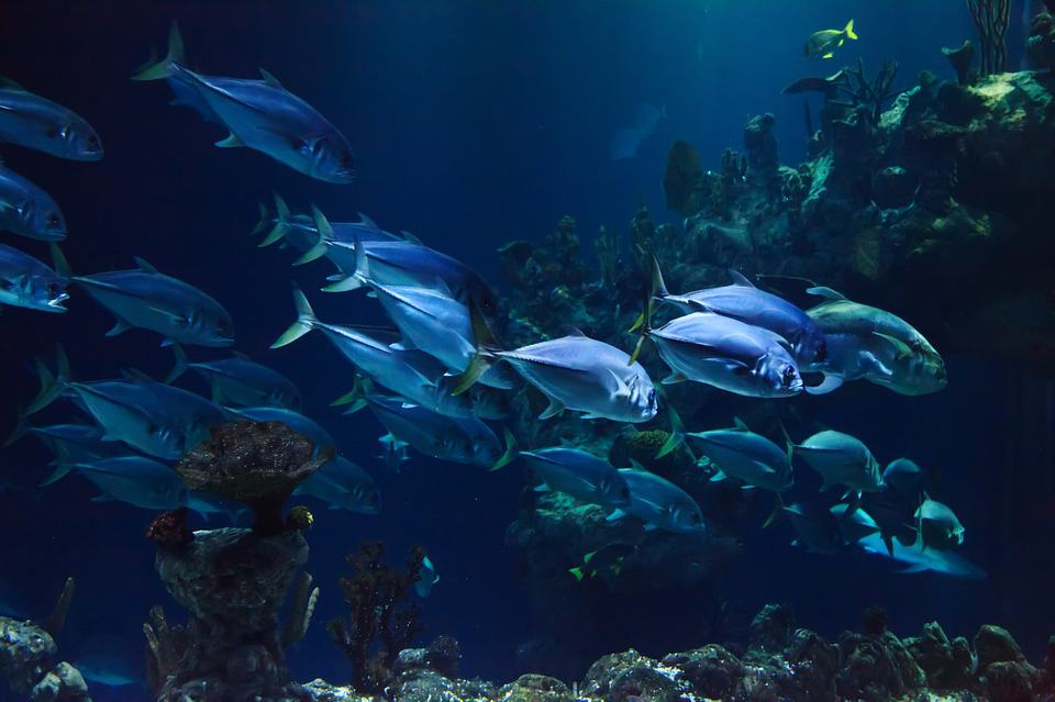 underwater fishes