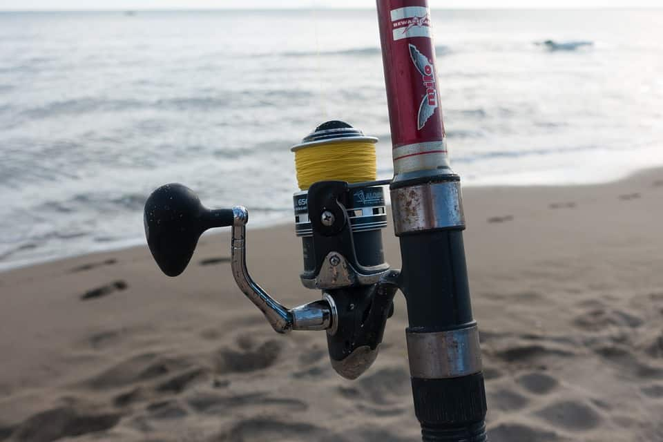 Fish Fishing Rod Fishing Line