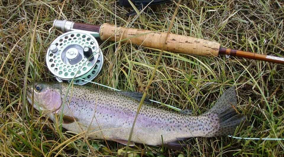 rainbow-trout-fish-fresh-caught-catch-gear-min